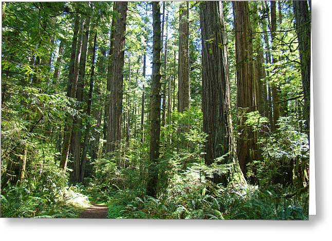 Baslee Troutman Greeting Cards - California Redwood Trees Forest art prints Greeting Card by Baslee Troutman