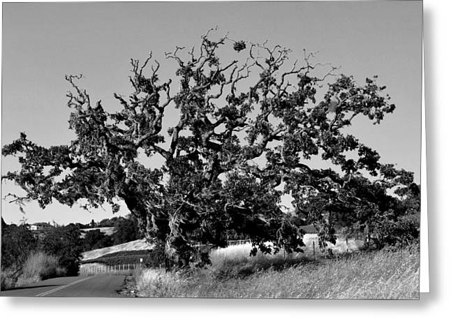 California Roadside Tree - Black And White Greeting Card by Matt Harang