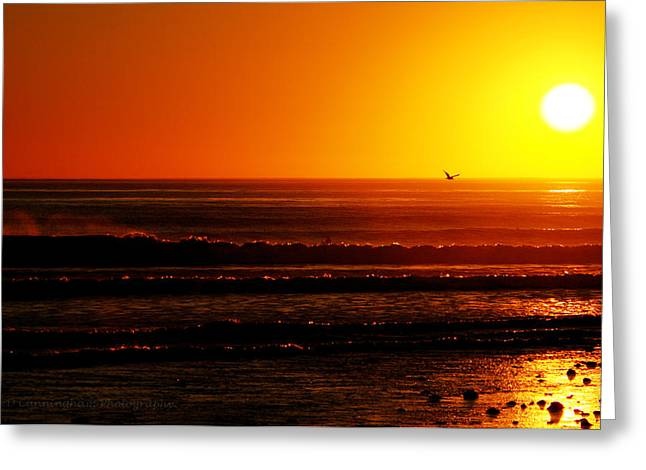 California Sunset  Greeting Card by Dorothy Cunningham