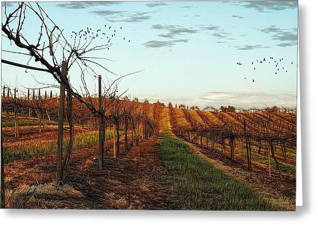 California Vineyard In Winter Greeting Card