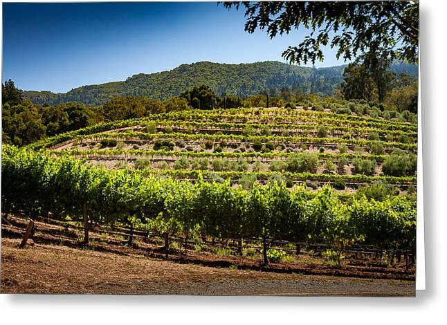 California Vineyard Greeting Card by Robert Davis