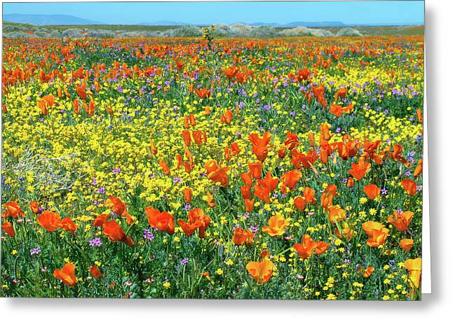 Greeting Card featuring the photograph California Wildflower Super Bloom by Ram Vasudev