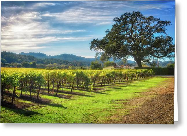 California Wine County - Sonoma Vineyard And Lone Oak Tree Greeting Card by Jennifer Rondinelli Reilly - Fine Art Photography