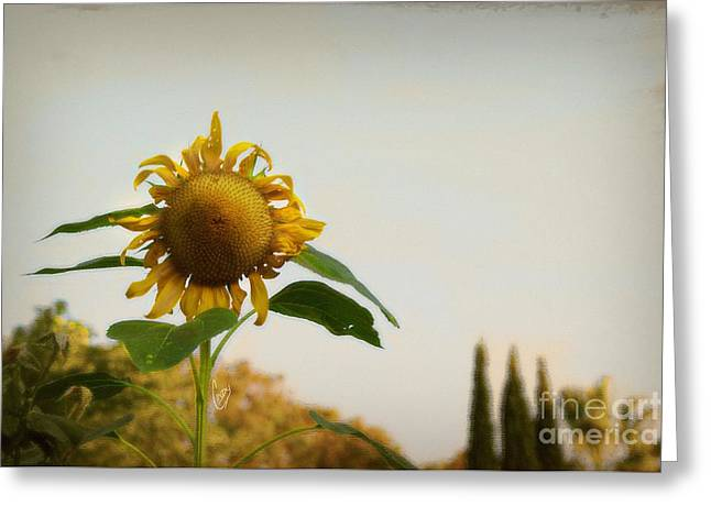 Californian Tuscany Greeting Card