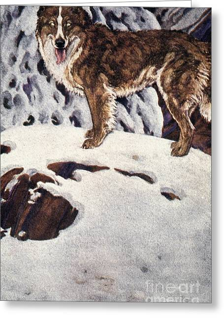 Call Of The Wild, 1903 Greeting Card by Granger