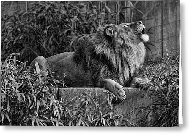 Call Of The Wild Bw Greeting Card by Keith Lovejoy