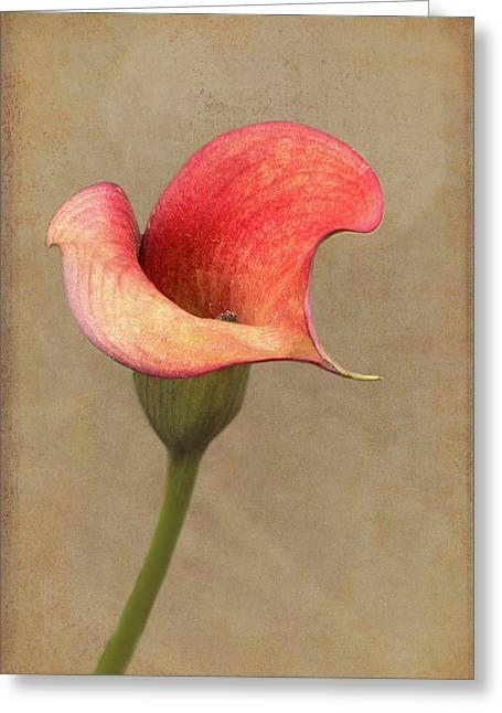 Calla In Red Greeting Card by Jurgen Lorenzen