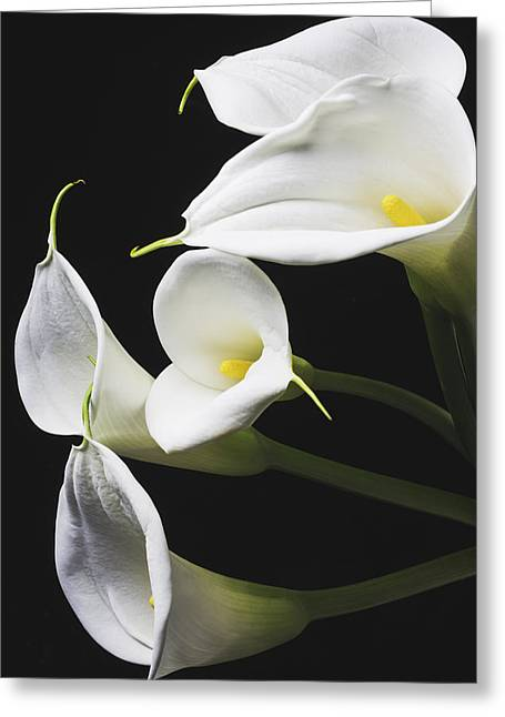 Calla Lilies Bunch Greeting Card by Garry Gay