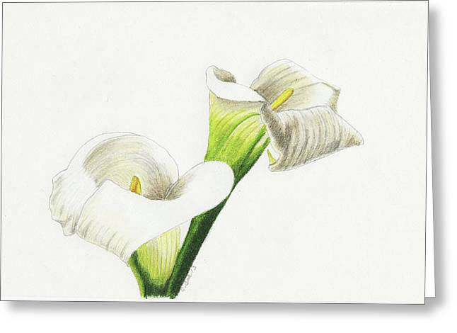 Calla Lilies No 1 Greeting Card by Christina Beck