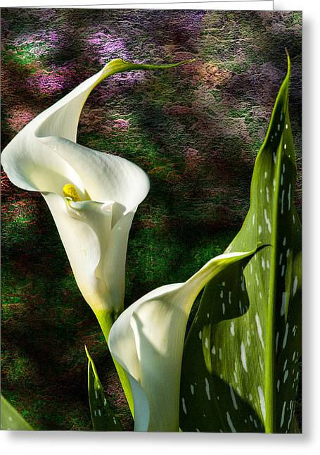 Calla Lily - P. Bright Greeting Card by J Larry Walker