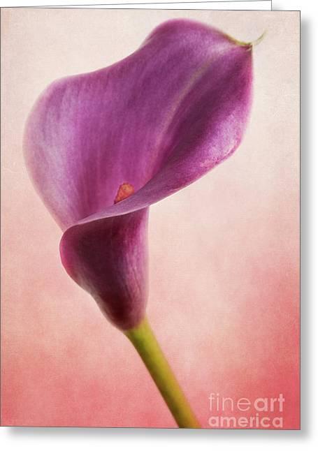 Calla Lily 2 Greeting Card by Elena Nosyreva