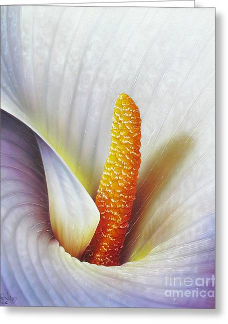 Calla Lily Greeting Card by Jurek Zamoyski