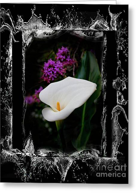 Greeting Card featuring the photograph Calla Lily Splash by Al Bourassa