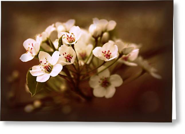Callery Pear Greeting Card