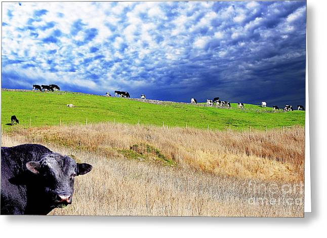 Calm Before The Storm Greeting Card by Wingsdomain Art and Photography
