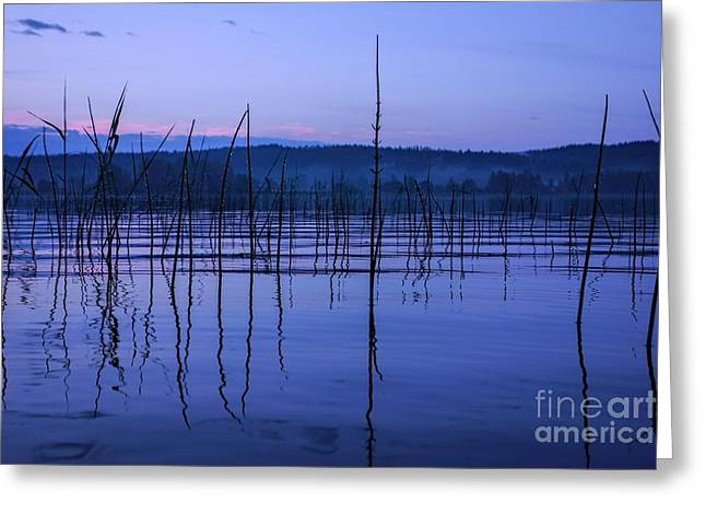 Calm Evening By A Moist Lake In Finland Greeting Card by Mikko Palonkorpi