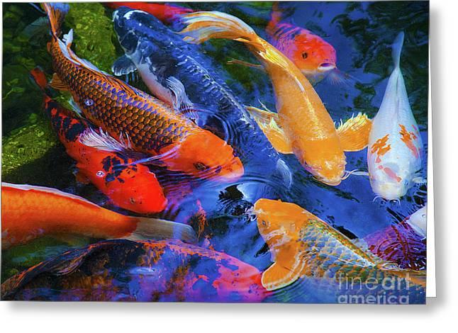 Calm Koi Fish Greeting Card