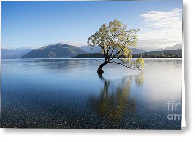 Greeting Card featuring the photograph Calm Morning by Scott Kemper