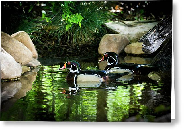 Calm Waters - Wood Ducks Greeting Card