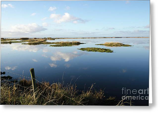 Calm Wetland Greeting Card