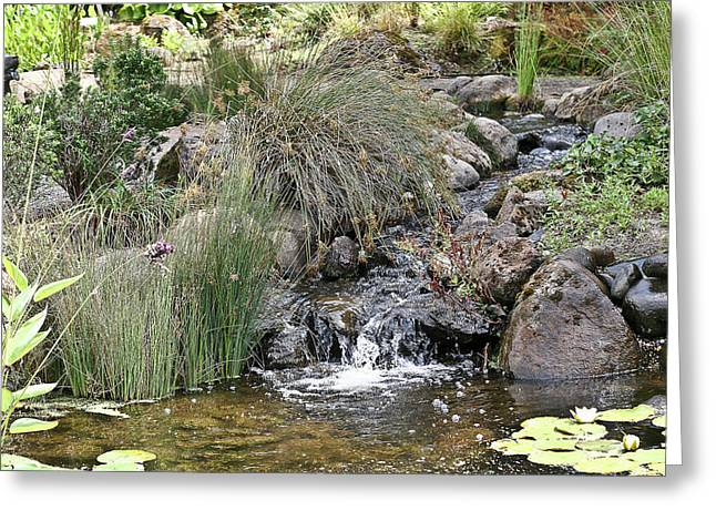 Calming Pond Greeting Card by Liz Santie