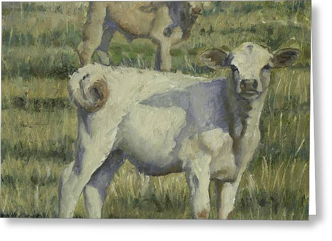 Calves In The Pasture Greeting Card
