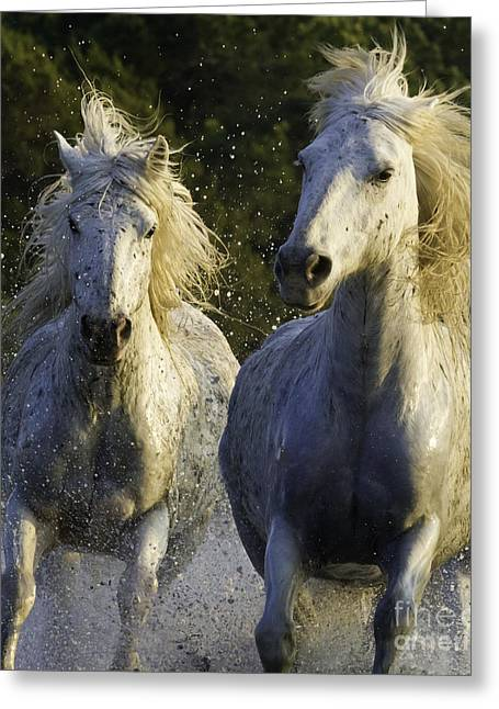 Camargue Spray Greeting Card by Carol Walker