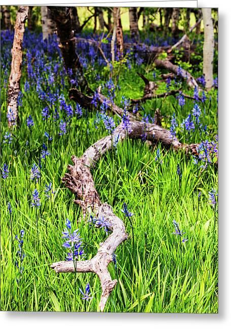 Camas Lilies And A Log Greeting Card by Vishwanath Bhat