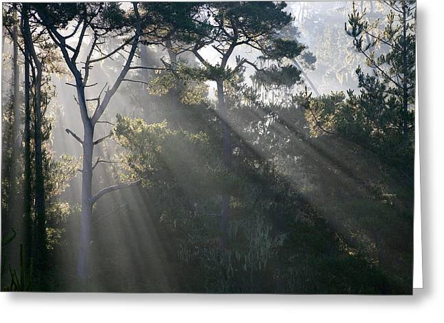 Cambria Pines Greeting Card by Greg Iger