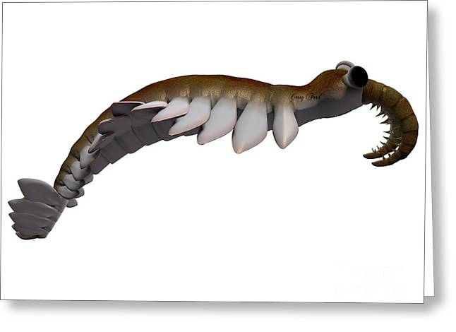 Cambrian Anomalocaris Side Profile Greeting Card by Corey Ford