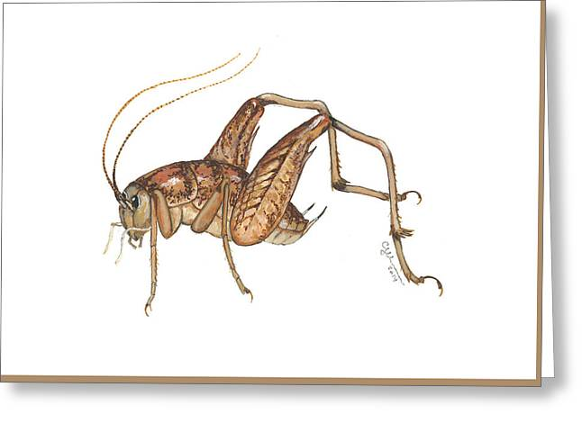 Camel Cricket Greeting Card
