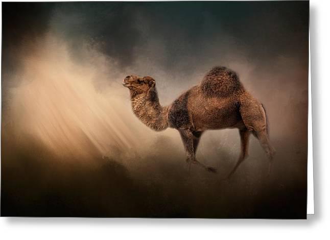 Camel In The Spotlight Greeting Card by Jai Johnson