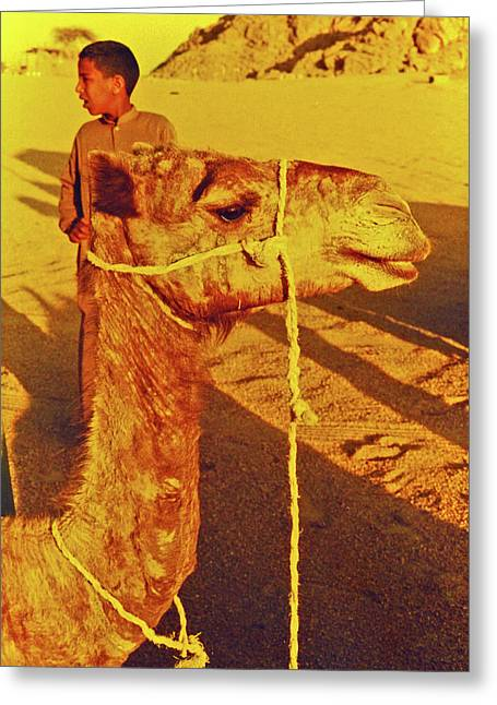 Sinai Photographs Greeting Cards - Camel Ride Greeting Card by Elizabeth Hoskinson