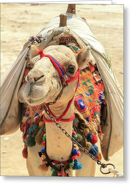 Greeting Card featuring the photograph Camel by Silvia Bruno