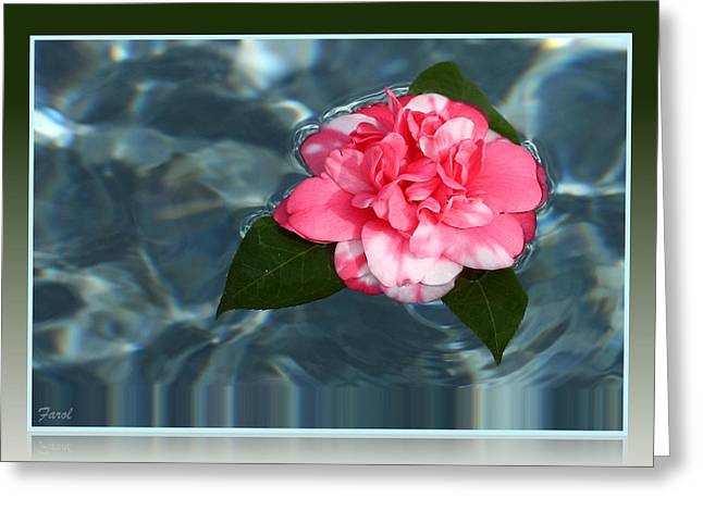 Greeting Card featuring the photograph Camelia On Water by Farol Tomson