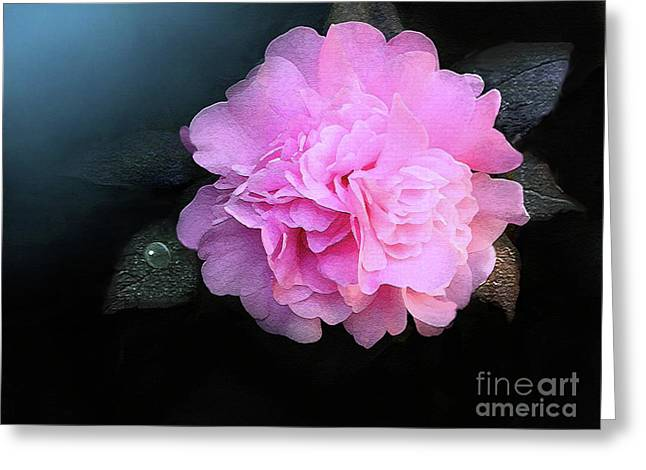 Camelia Greeting Card by Robert Foster
