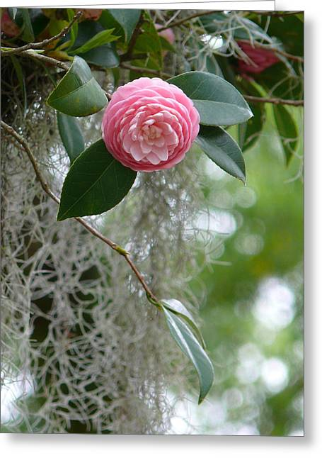 Camellia And Moss Greeting Card by Jeanne  Woods