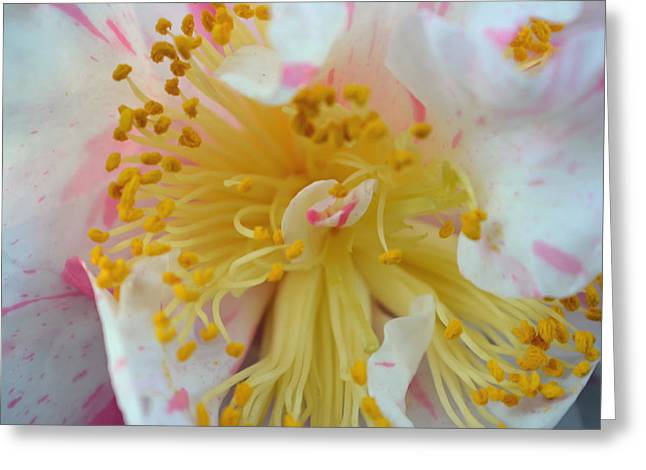 Camellia Macro Greeting Card