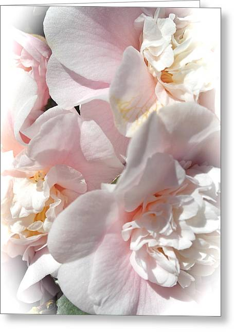 Camellias Softly Greeting Card