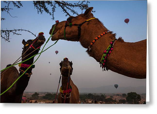 Camels And Balloons Greeting Card