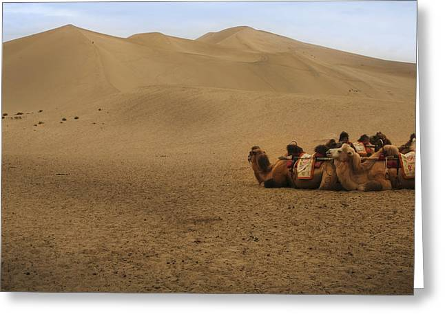 Camels Of The Silk Route Greeting Card