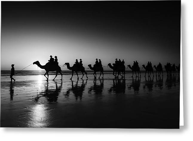 Camels On The Beach Greeting Card