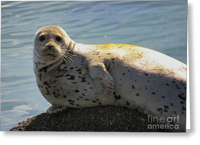 Camera Pose By Sea Lion Greeting Card