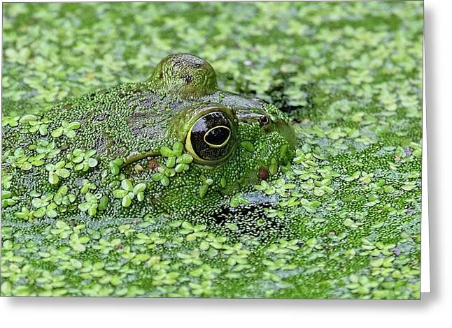 Camo Frog Greeting Card