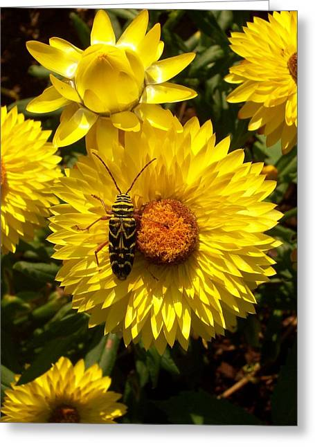 Camouflage Greeting Card by Bill Werle