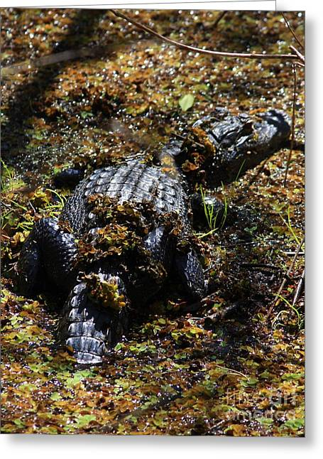 Florida Gators Greeting Cards - Camouflage Greeting Card by Carol Groenen