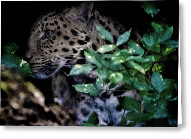 Camouflage Greeting Card by Martin Newman