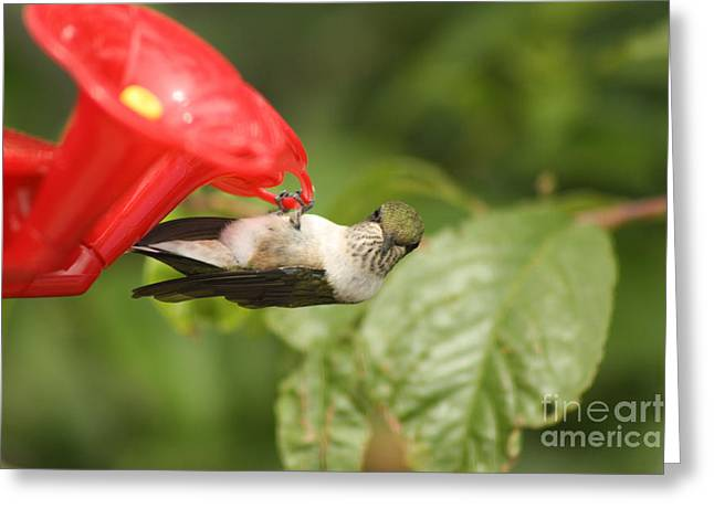 Can I Help You Hummingbird  Greeting Card by Cathy  Beharriell