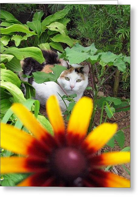 Can You See Me Greeting Card by Linda Henriksen