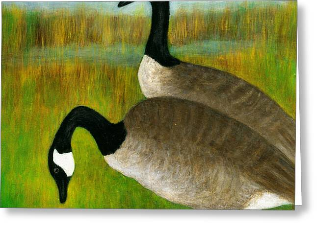 Canada Geese Grazing  Greeting Card
